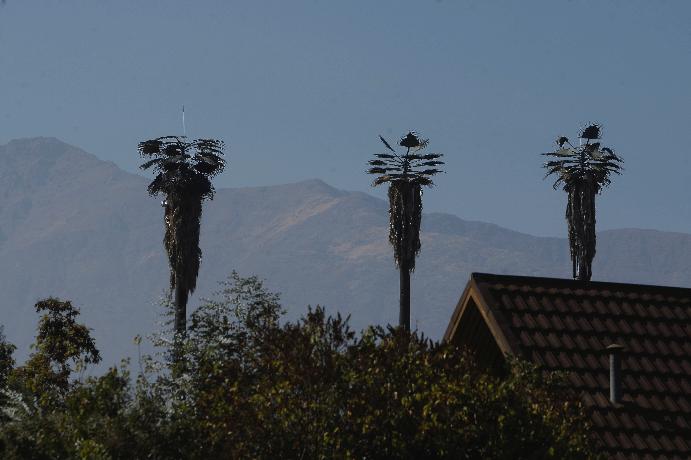 antena palmera