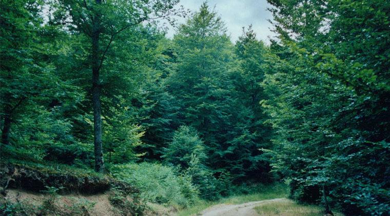 decreto ley fomento forestal