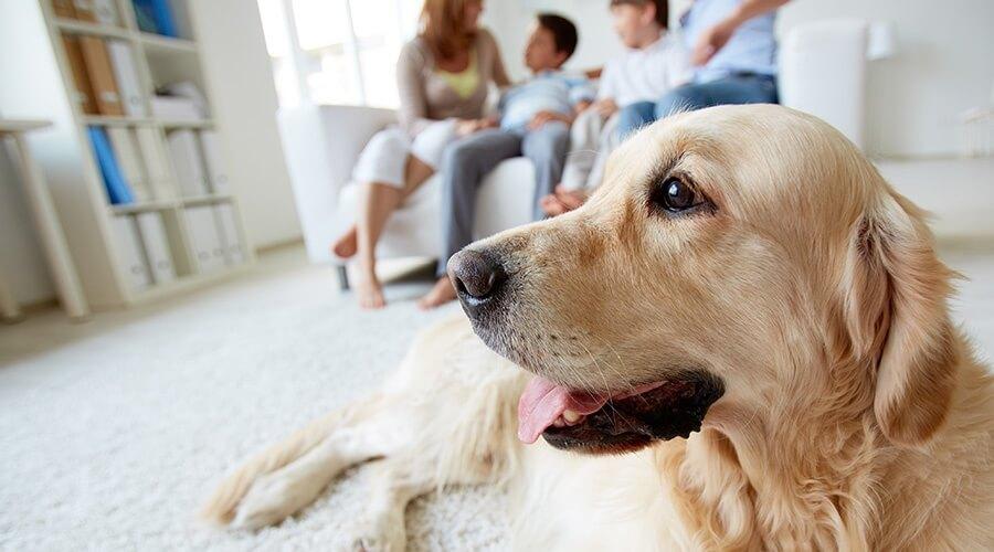 responsabilidad de los dueños de mascotas
