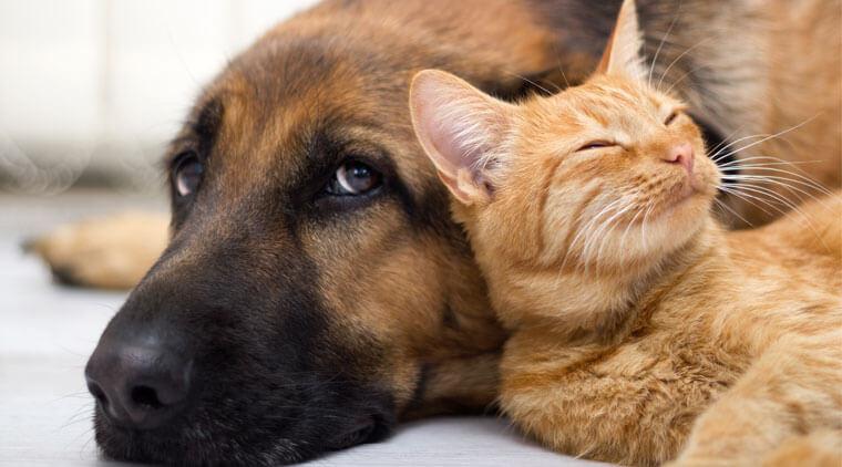 Ley de Tenencia Responsable de Mascotas